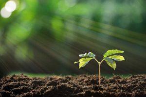 boom planten promotionele producten